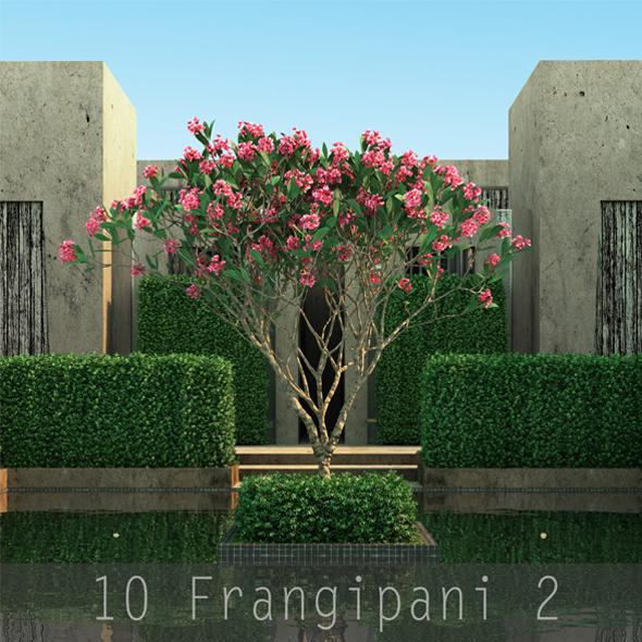 10 Frangipani Tree 2 - 3DOcean Item for Sale