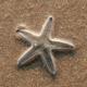 Star Fish On The Beach