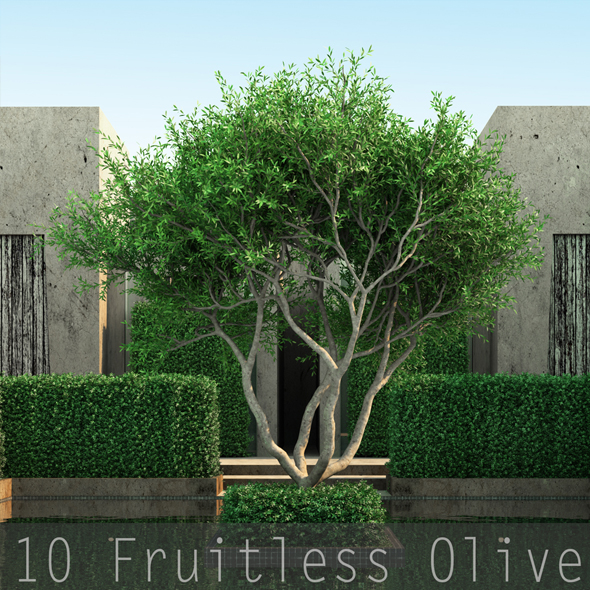 10 Fruitless Olive - 3DOcean Item for Sale