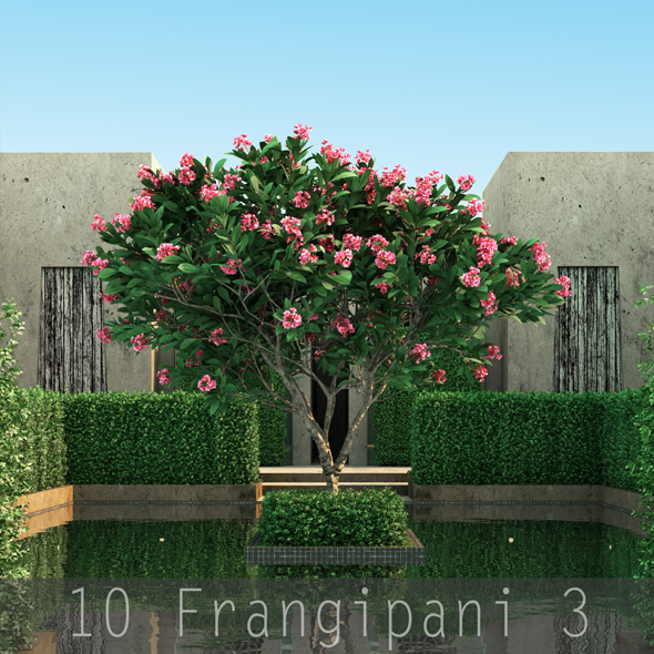 10 Frangipani 3 - 3DOcean Item for Sale