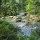 River in the Rainforest - VideoHive Item for Sale