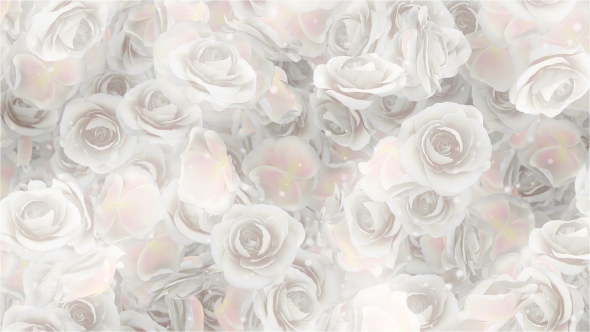Roses White Wedding Background by MiniMultik | VideoHive