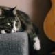 Cat Resting on the Sofa Near a Guitar