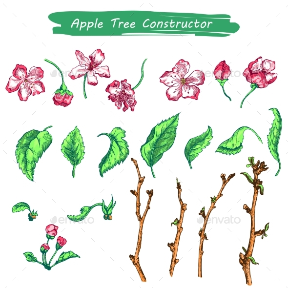Apple Tree Sketch in Color - Flowers & Plants Nature