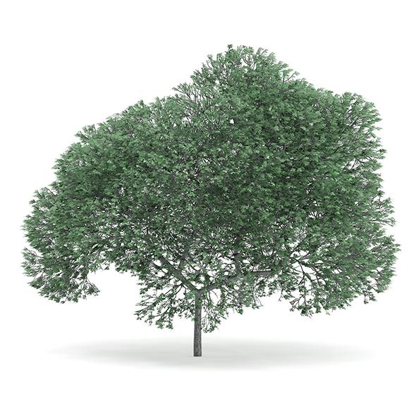 English Oak (Quercus robur) 9.4m - 3DOcean Item for Sale