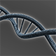 DNA structure - 3DOcean Item for Sale