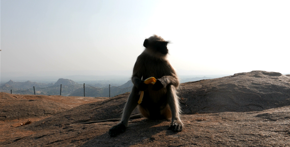 Monkey With Banana In The Mountains