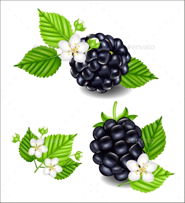 Composition of Ripe Blackberries and Flowers - Food Objects