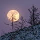 Night  Large Full Bright Moon Rises From Above Hill Into Sky.