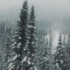 AERIAL: Flying Over the Snowy Forest - VideoHive Item for Sale