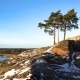 Scandinavian Landscape. Several Lonely Pines on Rock Over the Baltic Sea. Dolly.