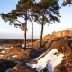 Scandinavian Landscape. Several Lonely Pines on Rock Over the Baltic Sea