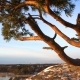 Scandinavian Landscape. Twisted Pine on the Cliff Over the Baltic Sea