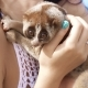 Slow Loris in the Hands of Pretty Girl on Beach