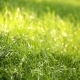 Green Grass in the Spring Park Illuminated By the Sun - VideoHive Item for Sale