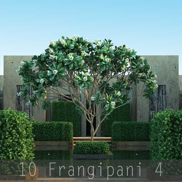 10 Frangipani 4 - 3DOcean Item for Sale