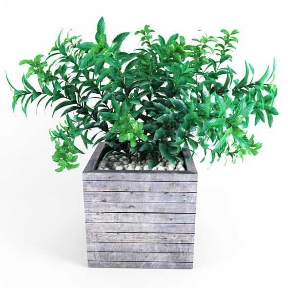 Plant tree 01 - 3DOcean Item for Sale