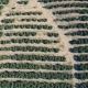 Aerial View Orange Trees Plantation - VideoHive Item for Sale