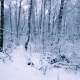 Snowy Branches in Forest.