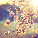 Garden of Sun