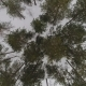Winter Forest View From Above - VideoHive Item for Sale