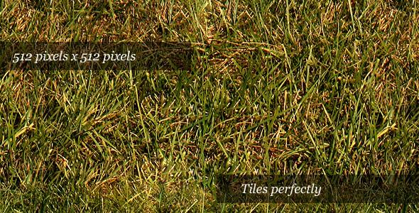 Grass Texture III - 3DOcean Item for Sale