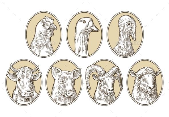 Farm Animals Set - Animals Characters