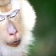 Close Portrait of Chewing Monkey
