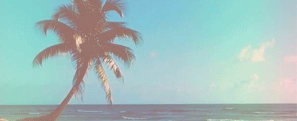 Beach i want5 ocean palm tree favim.com 3301020