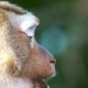 Monkey Eating Potato Chip