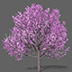 Growing Spring Tree - VideoHive Item for Sale