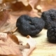 Tubers of Black Truffles Placed Among Oak Leaves - VideoHive Item for Sale