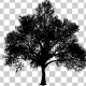 Growing Tree Silhouette - VideoHive Item for Sale