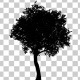 Growing Tree Silhouette Animation - VideoHive Item for Sale