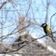 Birds Sitting on a Branch in Winter