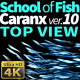 School of Fish Caranx-10 - VideoHive Item for Sale