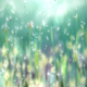 Dream Dandelion - VideoHive Item for Sale