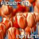 Flowering Spring Garden