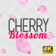 Cherry Blossom Falling - VideoHive Item for Sale