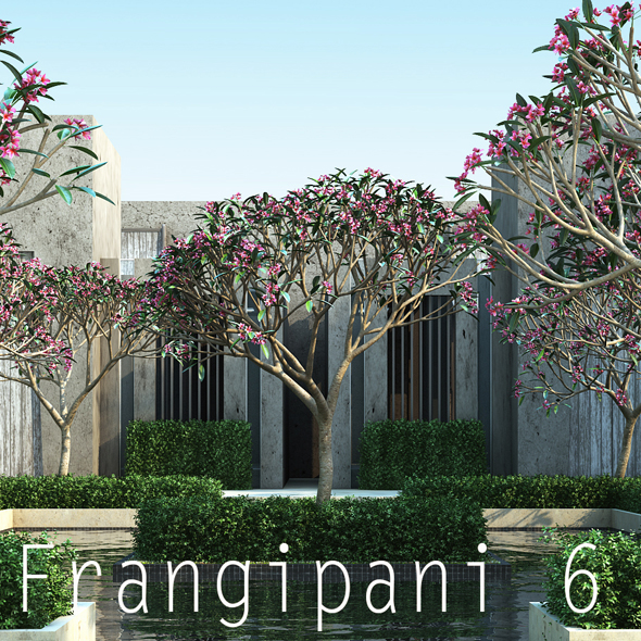 10 Frangipani 6 - 3DOcean Item for Sale