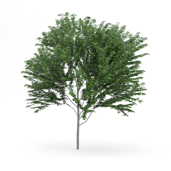 Common Ash (Fraxinus excelsior) 13.7m - 3DOcean Item for Sale