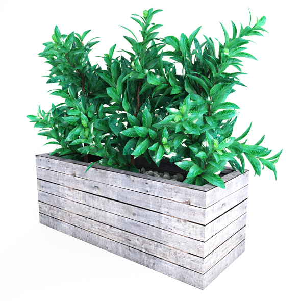 Plant tree 02 - 3DOcean Item for Sale