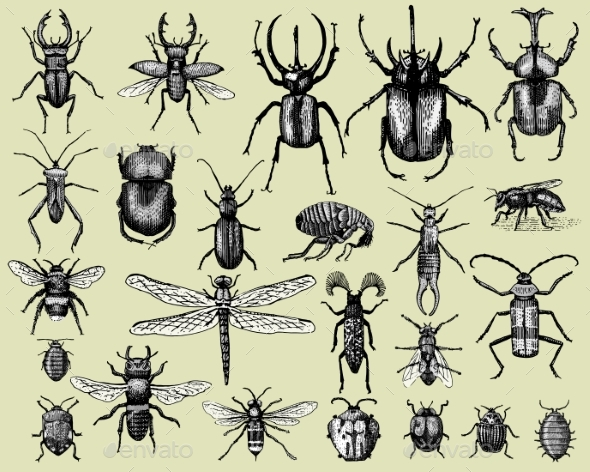 Set of Insects Bugs Beetles and Bees - Animals Characters