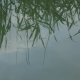 Plants Reflecting On Lake - VideoHive Item for Sale