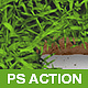 Spring Grass - Photoshop Action - GraphicRiver Item for Sale