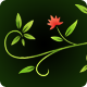 6 Floral Ornamental Animations - Water Color Style - VideoHive Item for Sale