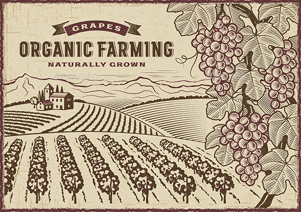 Grapes Organic Farming Landscape - Landscapes Nature