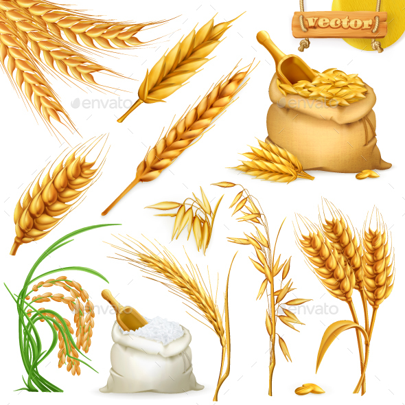 Wheat, Barley, Oat and Rice - Food Objects