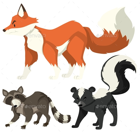 Three Types of Wild Animals on White - Animals Characters