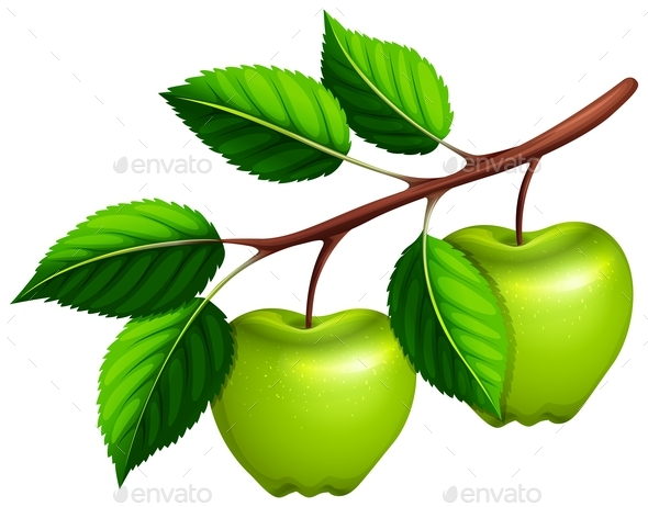 Green Apples on the Branch - Food Objects